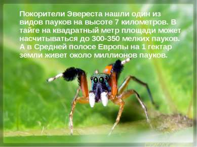 Покорители Эвереста нашли один из видов пауков на высоте 7 километров. В тайг...