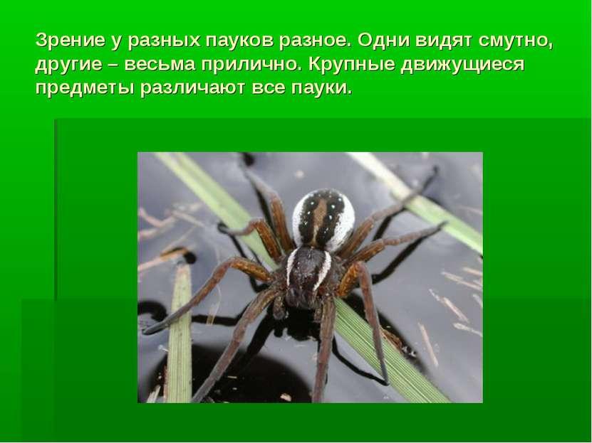Зрение у разных пауков разное. Одни видят смутно, другие – весьма прилично. К...