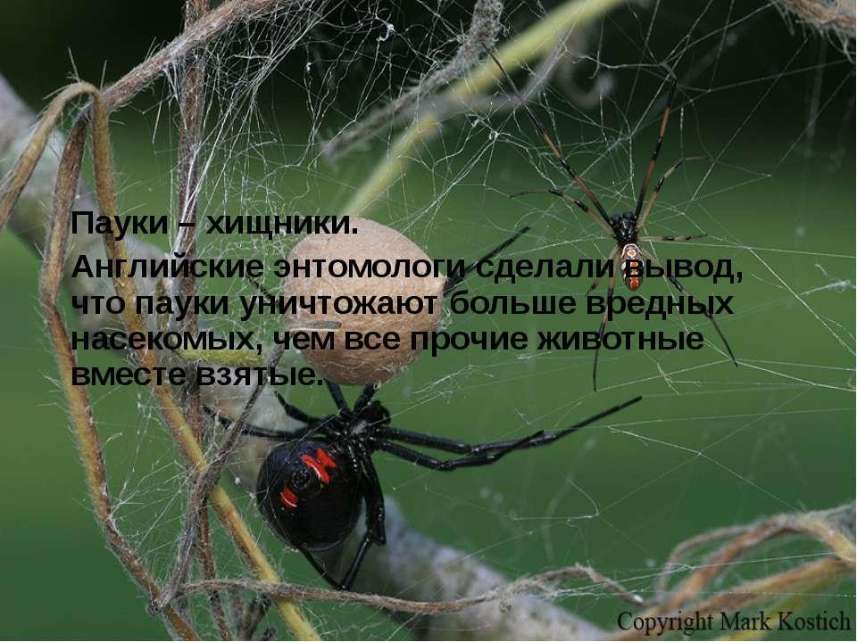 Пауки – хищники. Английские энтомологи сделали вывод, что пауки уничтожают бо...