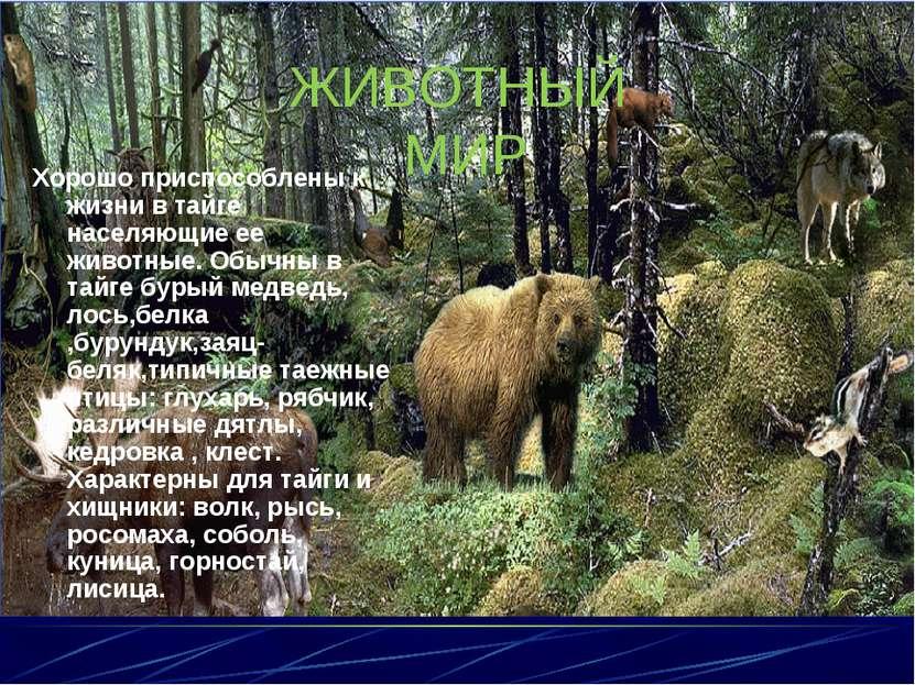ЖИВОТНЫЙ МИР Хорошо приспособлены к жизни в тайге населяющие ее животные. Обы...