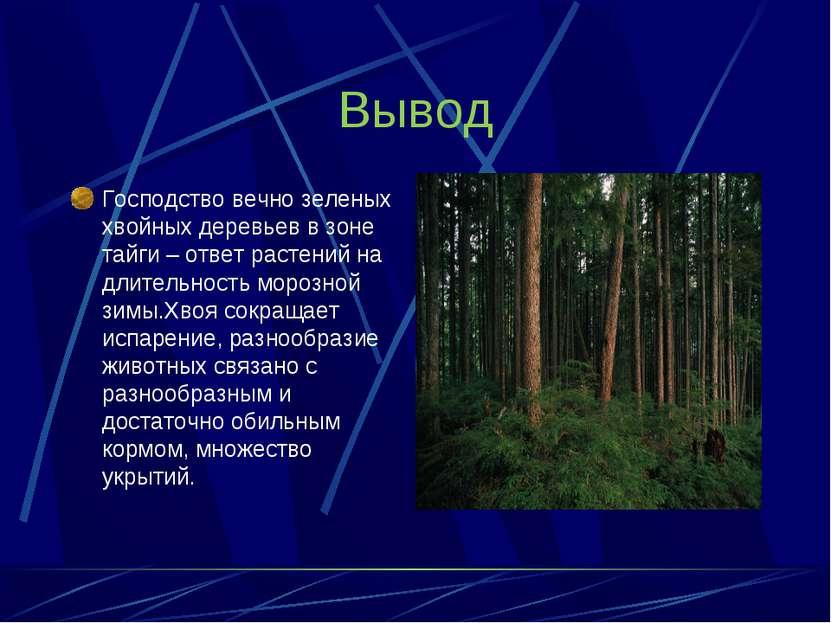 Вывод Господство вечно зеленых хвойных деревьев в зоне тайги – ответ растений...