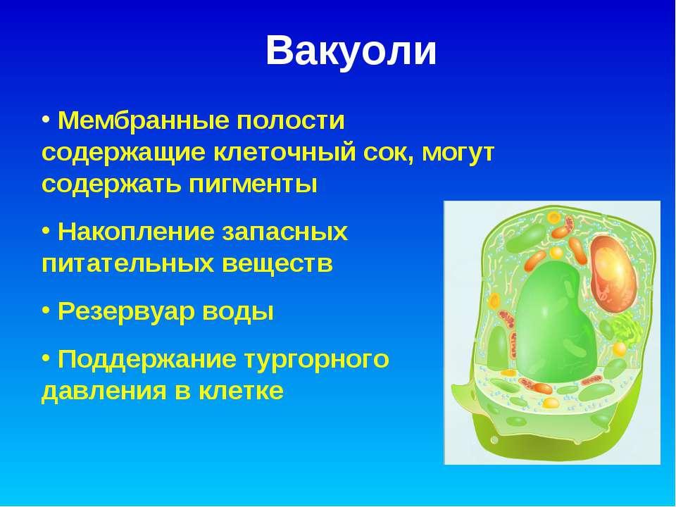 Вакуоли Мембранные полости содержащие клеточный сок, могут содержать пигменты...