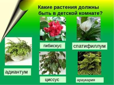 Какие растения должны быть в детской комнате? адиантум гибискус спатифиллум а...