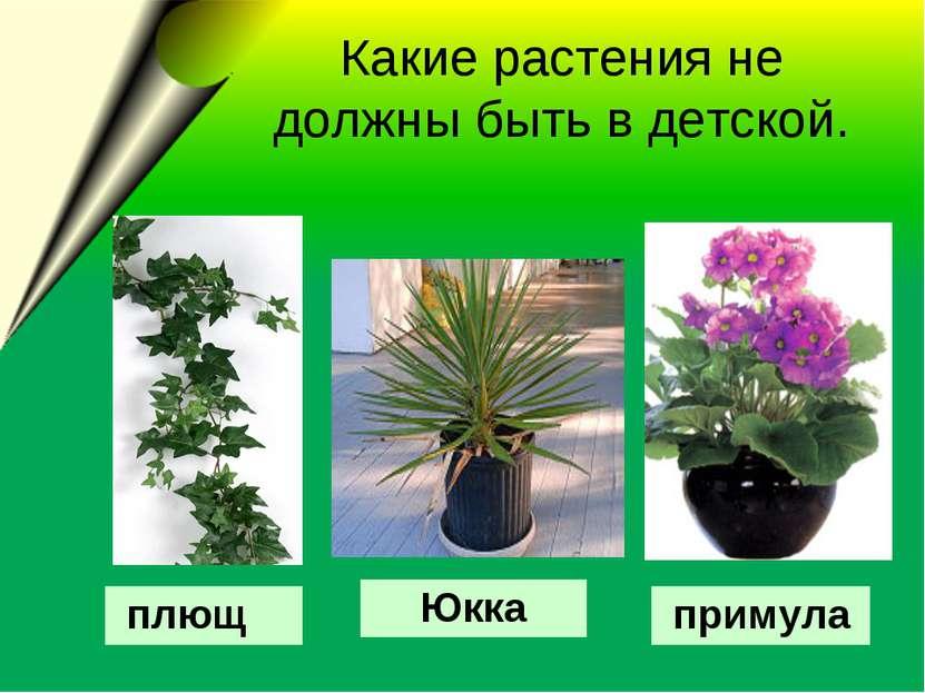 Какие растения не должны быть в детской. Юкка плющ примула