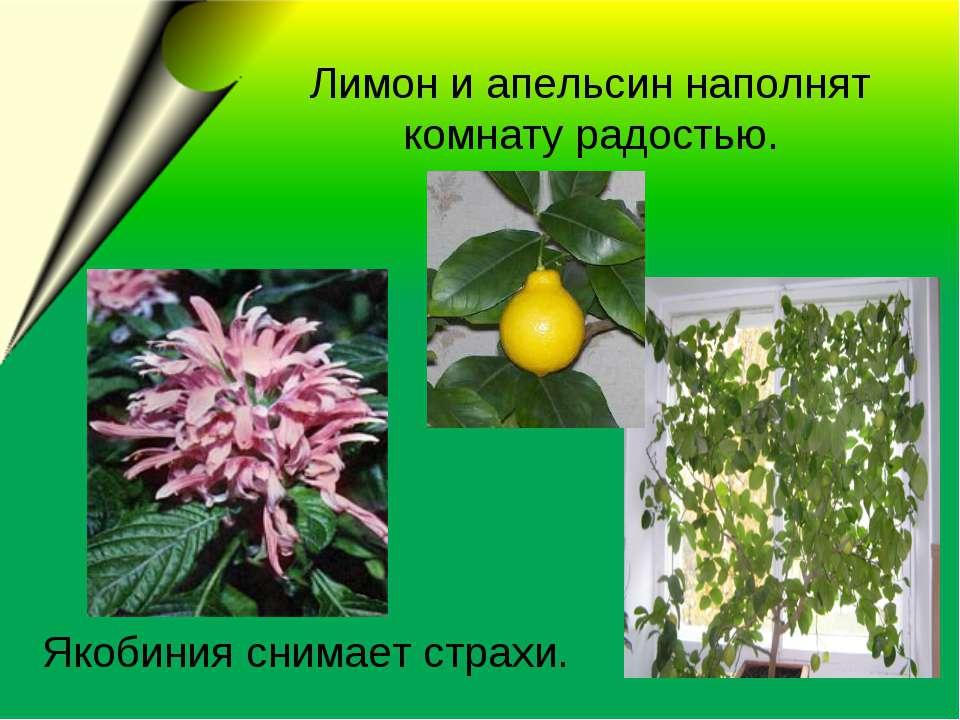 Лимон и апельсин наполнят комнату радостью. Якобиния снимает страхи.