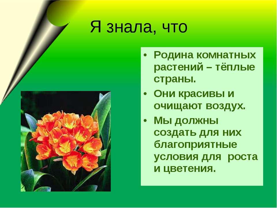 Я знала, что Родина комнатных растений – тёплые страны. Они красивы и очищают...