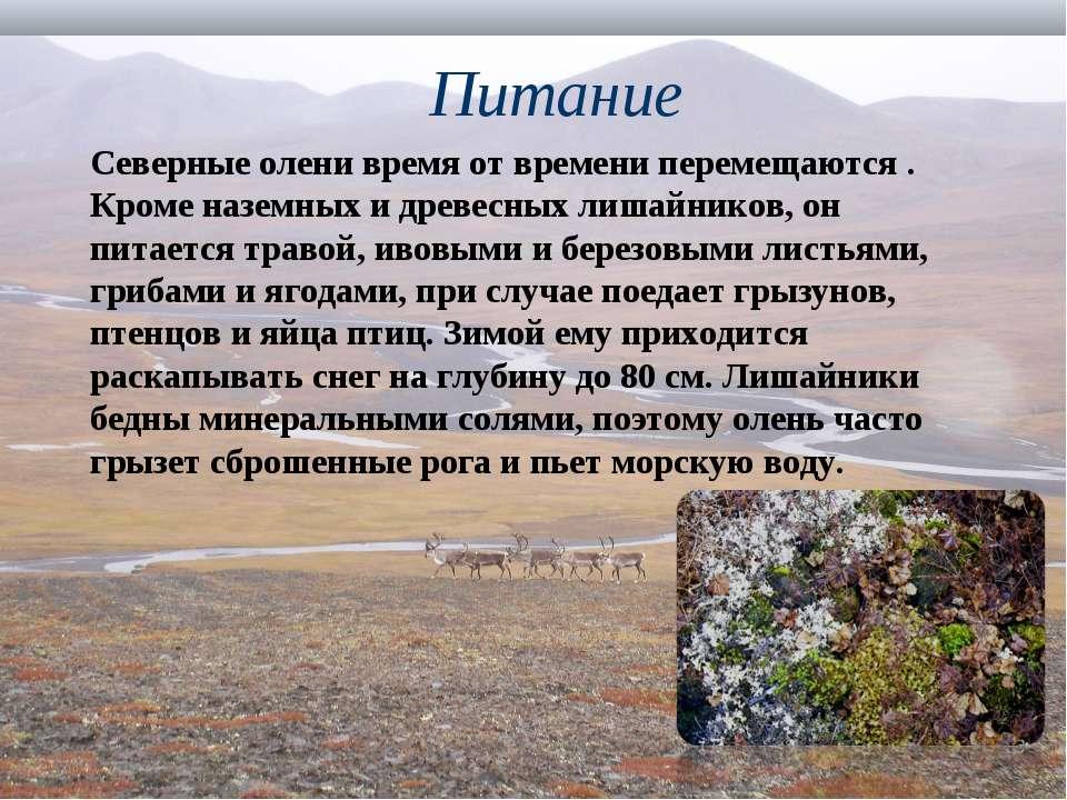 Питание Северные олени время от времени перемещаются . Кроме наземных и древе...