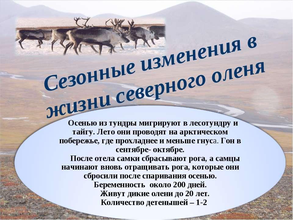 Сезонные изменения в жизни северного оленя