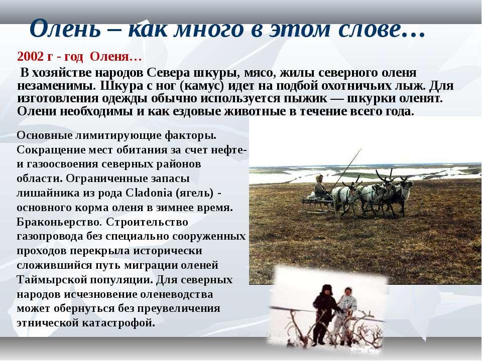Олень – как много в этом слове… 2002 г - год Оленя… В хозяйстве народов Север...