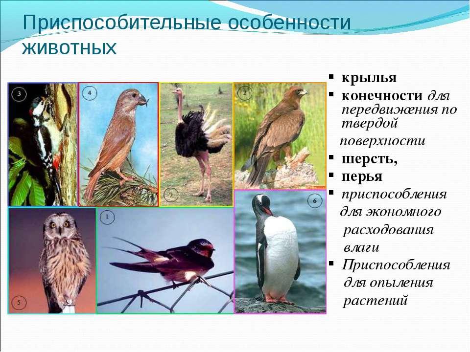 Приспособительные особенности животных крылья конечности для передвижения по ...