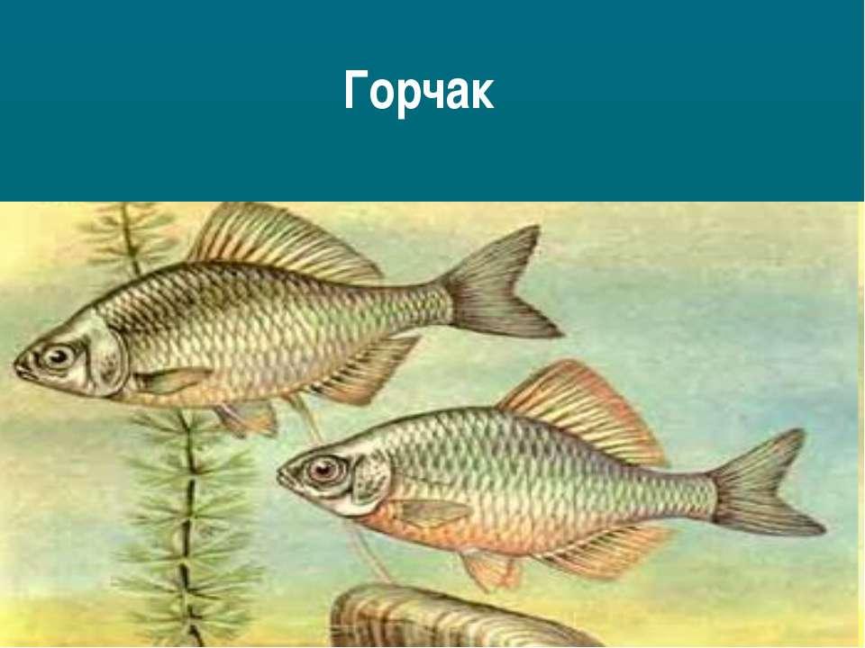 Горчак