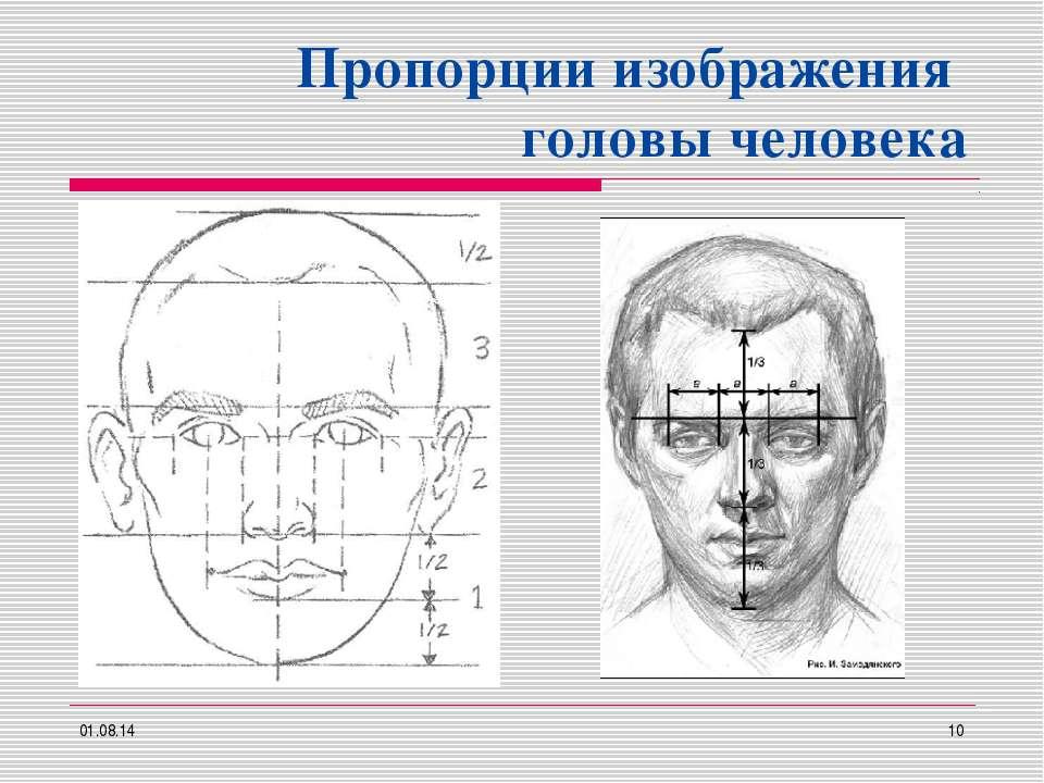 Пропорции изображения головы человека * *