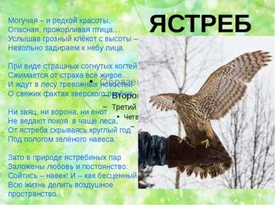 ЯСТРЕБ Могучая – и редкой красоты, Опасная, прожорливая птица… Услышав грозны...