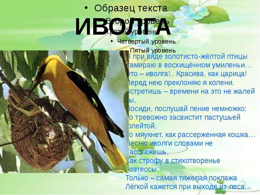 ИВОЛГА Я при виде золотисто-жёлтой птицы Замираю в восхищённом умиленьи… Это ...