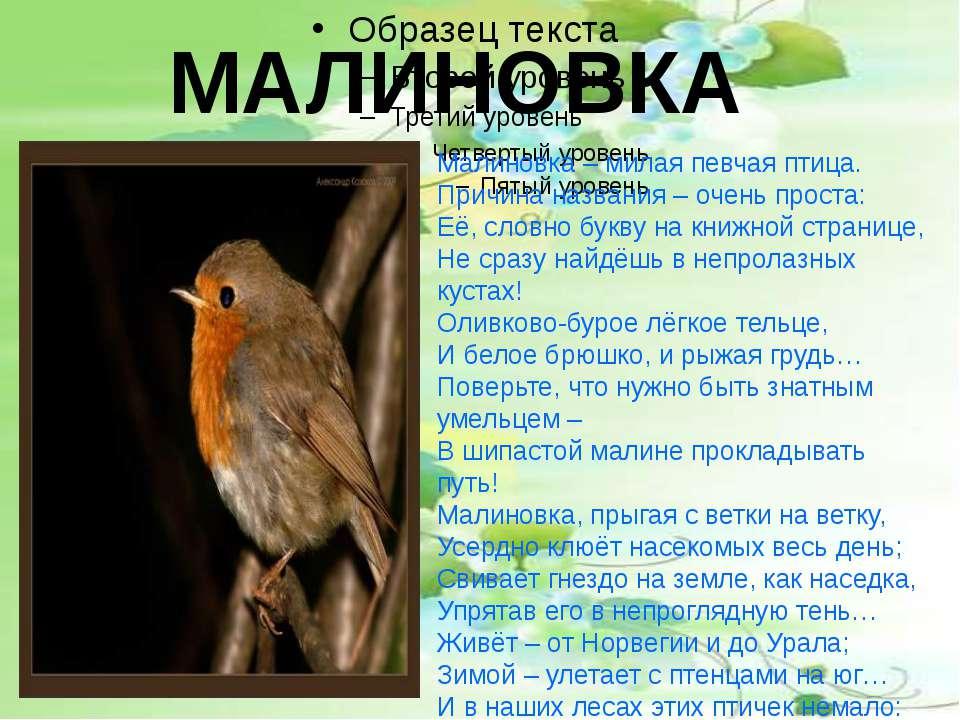 МАЛИНОВКА Малиновка – милая певчая птица. Причина названия – очень проста: Её...