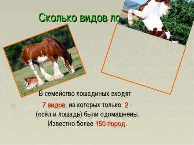 Сколько видов лошадей? В семейство лошадиных входят 7 видов, из которых тольк...