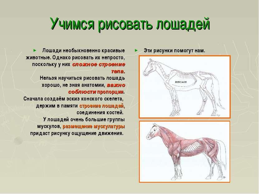 Учимся рисовать лошадей Лошади необыкновенно красивые животные. Однако рисова...