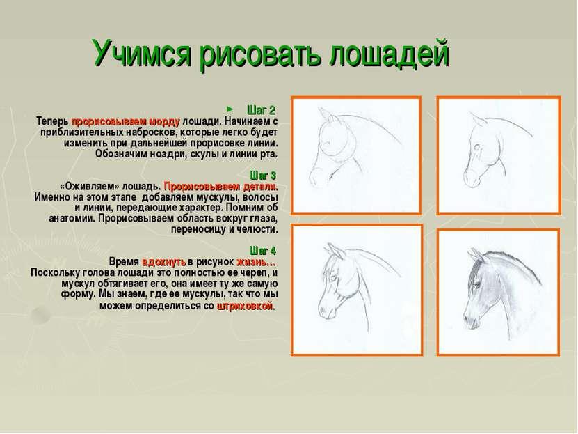 Учимся рисовать лошадей Шаг 2 Теперь прорисовываем морду лошади. Начинаем с п...
