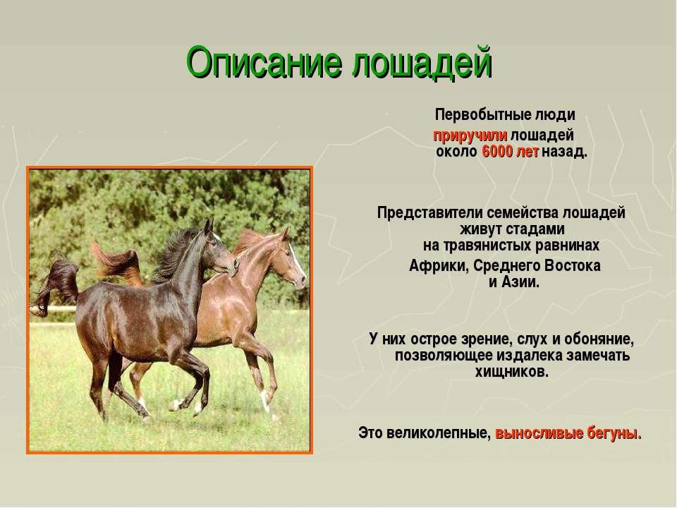 Описание лошадей Первобытные люди приручили лошадей около 6000 лет назад. Пре...