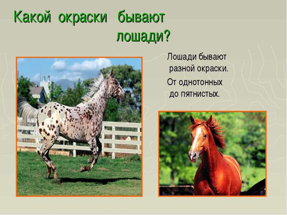 Какой окраски бывают лошади? Лошади бывают разной окраски. От однотонных до п...