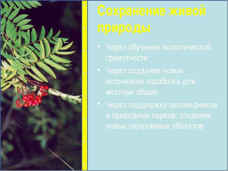 Через обучение экологической грамотности Через создание новых источников зара...