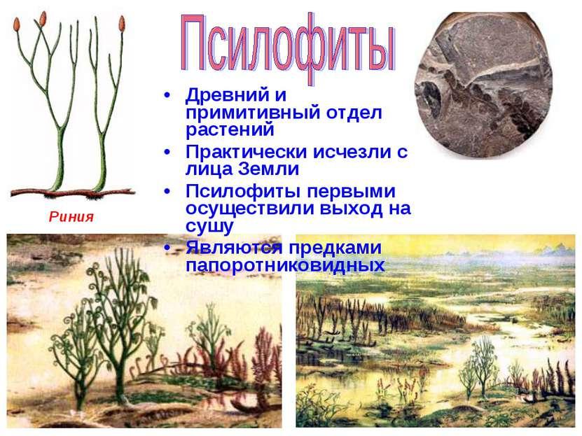 Древний и примитивный отдел растений Практически исчезли с лица Земли Псилофи...