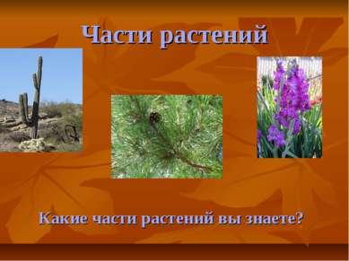 Части растений Какие части растений вы знаете?