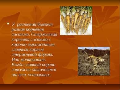 У растений бывает разная корневая система. Стержневая корневая система с хоро...