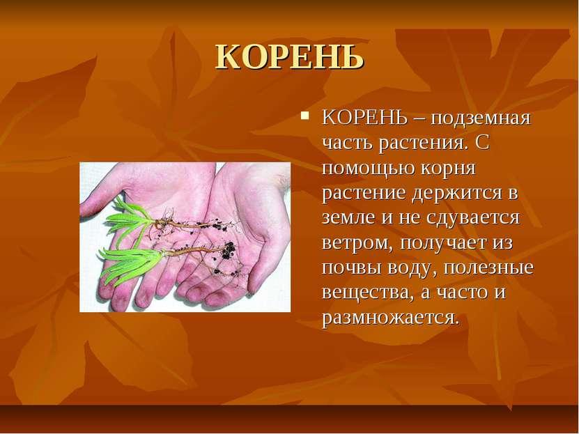 КОРЕНЬ КОРЕНЬ – подземная часть растения. С помощью корня растение держится в...
