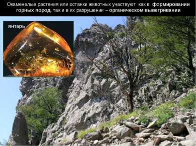 Окаменелые растения или останки животных участвуют как в формировании горных ...