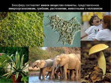 Биосферу составляет живое вещество планеты, представленное микроорганизмами, ...