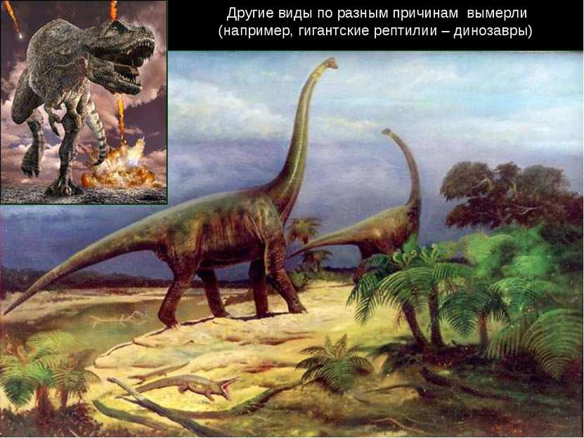 Другие виды по разным причинам вымерли (например, гигантские рептилии – диноз...