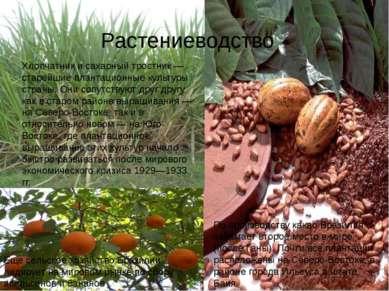 Растениеводство Хлопчатник и сахарный тростник — старейшие плантационные куль...