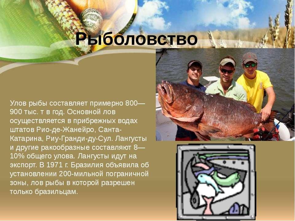 Улов рыбы составляет примерно 800—900 тыс. т в год. Основной лов осуществляет...