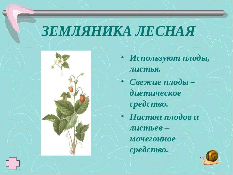 ЗЕМЛЯНИКА ЛЕСНАЯ Используют плоды, листья. Свежие плоды – диетическое средств...
