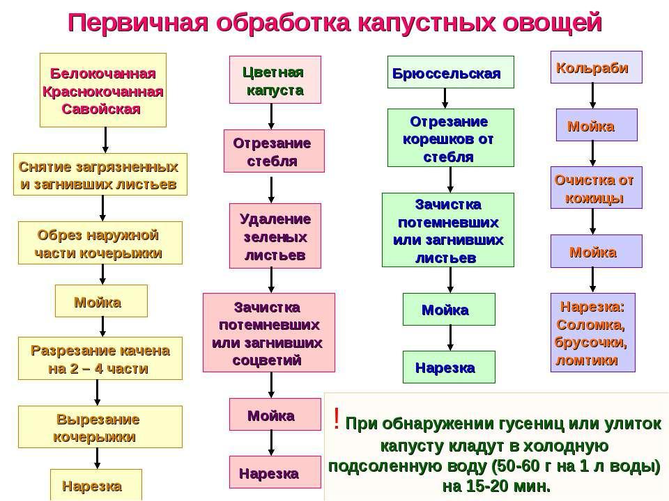 Первичная обработка капустных овощей Белокочанная Краснокочанная Савойская Сн...