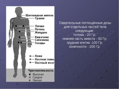Смертельные поглощённые дозы для отдельных частей тела следующие: голова - 20...