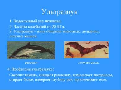 Ультразвук дельфин летучая мышь 1. Недоступный уху человека. 2. Частота колеб...