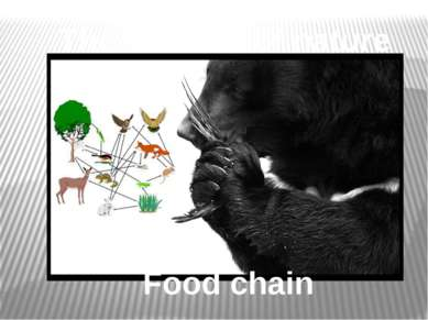 Food chain The balance of nature
