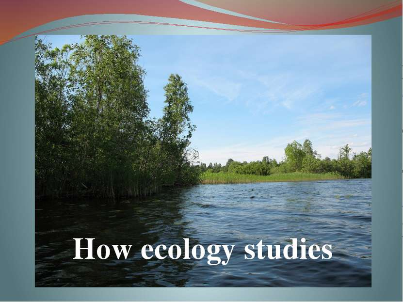 How ecology studies