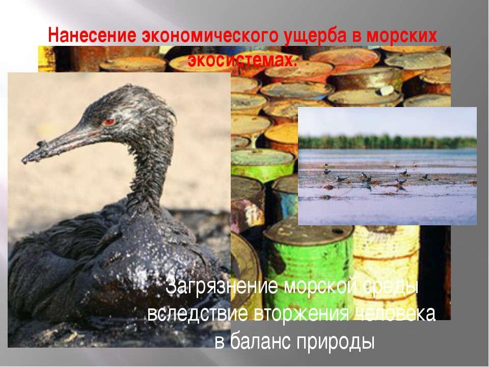 Нанесение экономического ущерба в морских экосистемах. Загрязнение морской ср...