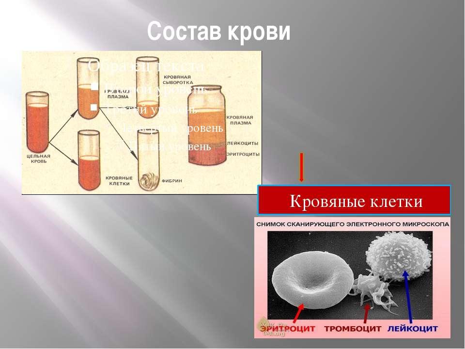 Состав крови Кровяные клетки