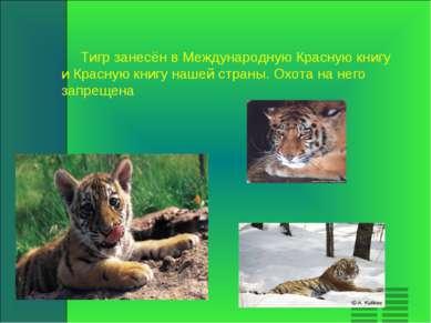 Тигр занесён в Международную Красную книгу и Красную книгу нашей страны. Охот...