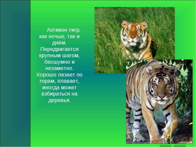 Активен тигр, как ночью, так и днём. Передвигается крупным шагом, бесшумно и ...