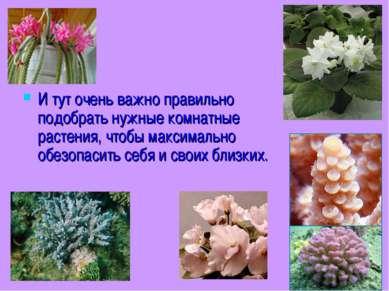 И тут очень важно правильно подобрать нужные комнатные растения, чтобы максим...