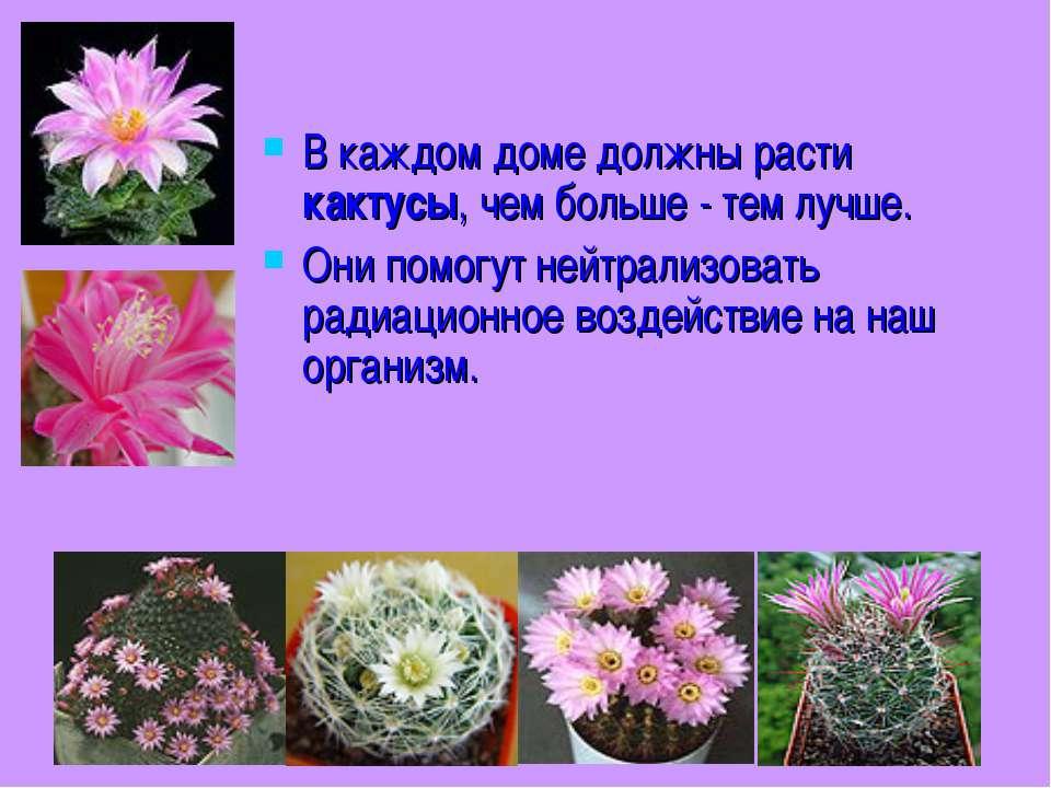 В каждом доме должны расти кактусы, чем больше - тем лучше. Они помогут нейтр...