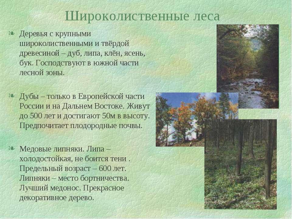 Широколиственные леса Деревья с крупными широколиственными и твёрдой древесин...