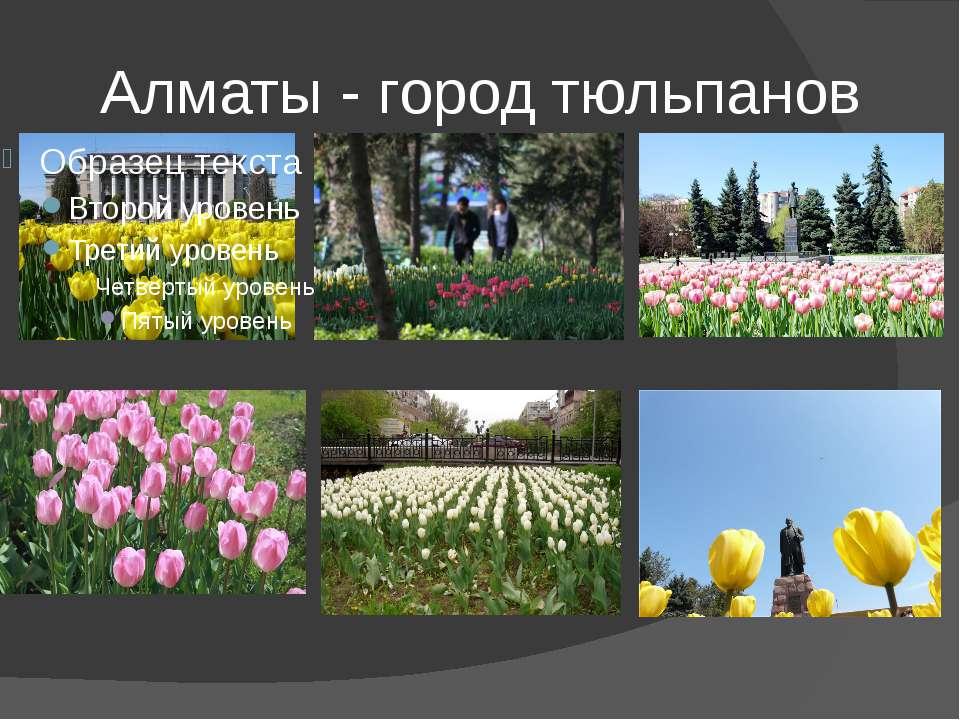 Алматы - город тюльпанов