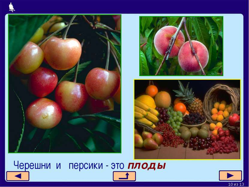 Черешни и персики - это плоды * из 13