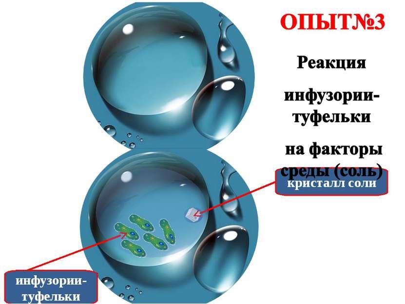 инфузории-туфельки кристалл соли